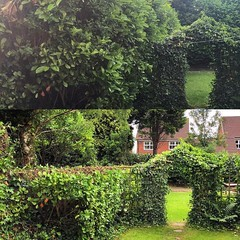 "Reducing over grown hedges for Stump Removal Services today #wardenstreecare <a style=""margin-left:10px; font-size:0.8em;"" href=""http://www.flickr.com/photos/137723818@N08/27384033923/"" target=""_blank"">@flickr</a>"