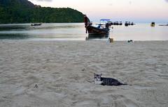 Gato en Phi phi