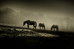 War Horse (stocks photography.) Tags: horse warhorse michaelmarsh
