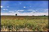 Poppy field (Krueger_Martin) Tags: flowers red sky rot nature field clouds deutschland colorful natur himmel wolken blumen wideangle 24mm brandenburg farbig hdr bunt weitwinkel poppyfield mohnblumen photomatix mohnblumenfeld festbrennweite primelense canoneos5dmarkii canonef24mmf14lii canoneos5dmark2
