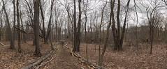 DSC_0267BD80a  Log Lined Path © 2016 Paul Light (Paul Light) Tags: trees nature landscape path lexington massachusetts logs newengland parkermeadow