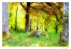 If you go down to the woods today.... (mistinguette.mistinguette) Tags: trees light green leaves forest woods border foliage frame processing trunks underwood underwoods