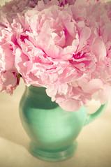 my green jug of peonies (photoart33) Tags: pink stilllife sunlight green petals jug peonies