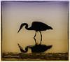 Heron at Sunset (MyRidgebacks - Sharon C Johnson) Tags: heron halfmoonbay seacoast seabird pillarpoint magicunicornverybest magicunicornmasterpieces sharoncjohnsonphotography