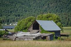 Old Tin Roof Barn! (Herringbone2) Tags: reclaimed oldbarn fallingapart takenover wheaterworn notbeingused