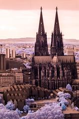 DSC02664 (FritzchensFritz) Tags: kln nordrheinwestfalen deutschland infrarot infrared ir645 heliopan falschfarben false colors