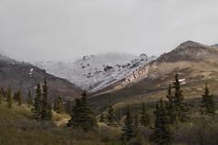 DSC_0726 (David.Sankey) Tags: alaska alaskarange mountains mountainrange denali denalinationalpark hiking nature park nationalparkdenalinationalparkandpreserve mckinley travel fog rivers savageriver savagealpinetrail trial savagealpine