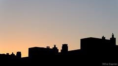 Observando el amanecer - Watching the sunrise. (Eva Ceprin) Tags: city sky sun seagulls sol sunrise buildings contraluz landscape dawn edificios ciudad paisaje amanecer cielo gaviotas backlighting urbanlandscape paisajeurbano nikond3100 tamron18270mmf3563diiivcpzd evaceprin
