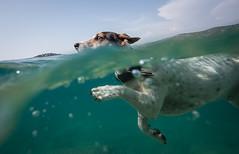 Split underwater dog photo (Jan.Halama) Tags: dog underwater dicapaccase samyang12mmf20
