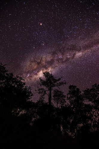Milky Way above the Treeline