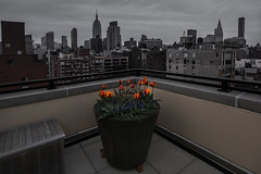 680 315 a (paulie~) Tags: nyc rooftop chelsea manhattan