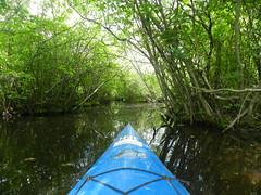 Kayaking (Christine_Ray) Tags: park county new pine state reserve national jersey pinelands salem barrens parvin belleplaincapemayandparvin