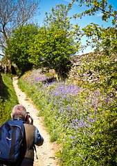 Photographing the Bluebell Path (CurlewRiver) Tags: uk flowers england bluebells walking path yorkshire photograph yorkshiredales settle wharfe photgrapher austwick