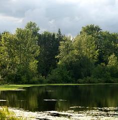 MILL LAKE SEASONS:  Storm's brewing.....Mill Lake,  BC (vermillion$baby) Tags: storm abbotsford fraservalley bc canada milllake lake seasons summer green milllakeseasons wetlands