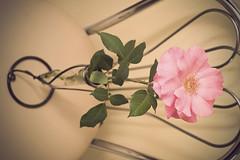 Old Style - Vintage Rose (3) (arfi_arfi) Tags: flowers roses plants plant flower color macro art nature colors beauty rose vintage garden petals flora artistic blossom retro rosepetals artisticphotography flowerart flowerscolors amazingdetails