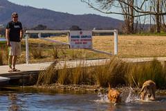 10 (ajspaldo) Tags: pets dogs water animals play n australia canberra act australiancapitalterritory yarralumla tonyspalding ajspaldo ajspalto lakeburleygriffi