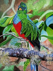 Quetzal crested (Carlos Trevino Artwork) Tags: nature birds forest watercolor artwork rainforest acrylic quetzal tropicalbirds ramphastos tropican acrylicpaintings quetzals birdpaintings crestedquetzal watercolorbirds