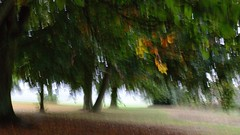 October (wetbicycleclappersoup) Tags: icm intentionalcameramovement
