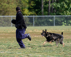 SPT_3425 (tfinzel) Tags: county dog field office police competition charles criminal national protection handler trials patrol k9 apprehension sheriffs gunfire 2013 ccso uspca