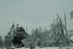 Ice Storm 09 (Porch Dog) Tags: nikon kentucky icestorm garywhittington january2009 marshallcokentucky