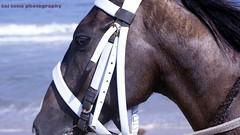 horse head (sai senu) Tags: horse india animal