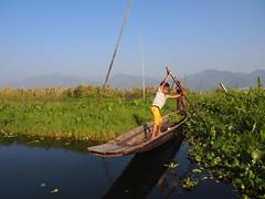"Practicing boat manouvres at Inle Lake (Myanmar 2013) (paularps) Tags: travel nature asia flickr fishermen culture natuur buddhism temples myanmar inlelake inle birma pagodas cultuur reizen azië ""paul travel"" arps ""olympus 2013 ""adventure stiltedhouses paularps arps"" epl"""