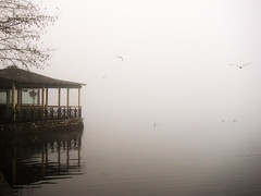 Cinematic (jimiliop) Tags: winter white mist lake reflection tree weather birds fog mystery flying dock branches calm cinematic