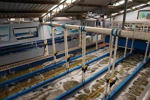 Loberst processing plant (2)