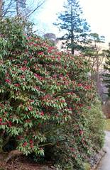 Younger Botanic Gardens