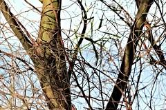 nature australia fresh entanglement DSCF9557p 1080 (Max Metz) Tags: city winter light summer urban max art psp paintshop photo spring fuji photos low photograph handheld pro fujifilm myth metz x5 55200 55200mm xe1 pasm psam f3548 xtrans fujixe1 fuji55200mm