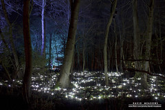 Carpet of Light (DMeadows) Tags: lighting wood blue trees light white house gardens by forest woodland walking carpet lights scotland woods colours estate fife path walk turquoise illuminated trail snowdrops lit visual starlight cambo kingsbarns davidmeadows dmeadows davidameadows dameadows