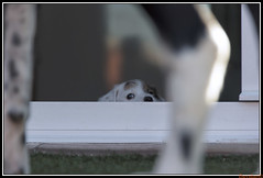 TRES-3 (DAVIDARI) Tags: perros adopcin