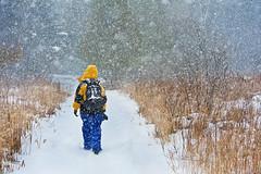 Blizzard ! (riclane) Tags: winter snow storm yellow landscape ottawa blizzard oldquarrytrail