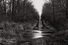 Temptation (cindiefearnall) Tags: rural puddle blackwhite backroad greycounty donkeypath