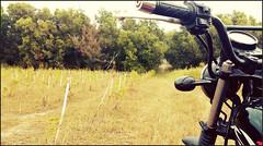 IMAG1859 (KJP.hoto) Tags: street city light boy portrait espaa pet house man blur color building tree verde green luz window leaves animal forest cat outside ventana fly casa calle leaf high spain eyes nikon day flat y bright bokeh retrato candid edificio ground ciudad scooter rope walker ojos gato zen desenfoque toyota motorcycle tightrope balance ropes salamanca afraid len alto da miedo mascota flicker brillante l4l kymco castilla fuera piso equilibrio volar equilibrista scoter blackbike ktr d7000