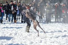 Washington Snowball Fight