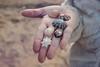 Shells (everyday sh⊙_☉ter) Tags: park beach forest sydney waterfalls kookaburra wattamolla garie royalnationalpark audley stanwell hackerriver