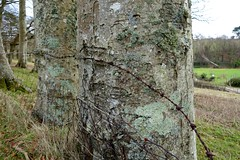 Barb wire (Sarah Marston) Tags: trees grass fence wire rust sony january isleofwight lichen barbwire 2015 rx100m2