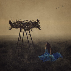 the protection of important things (brookeshaden) Tags: bird field birds fog fairytale photoshop bluejay fallen backstage behindthescenes birdsnest ladders fineartphotography foggyfield conceptualphotography brookeshaden woodenladders
