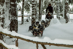 Cold spell. (LeaBsr) Tags: dog mountain snow cold forest powder sled pleasure coolness