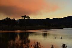 Red smoke (Luke6876) Tags: trees sunset water dam smoke burnoff tenterfield