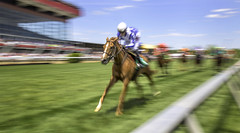 A Panning Panorama at Pimlico for Preakness (crabsandbeer (Kevin Moore)) Tags: people panorama horse motion blur sports race speed track action pano maryland baltimore event preakness jockey ponies panning blackeyedsusan pimlico horserace