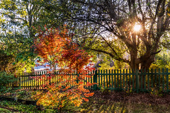 A touch of autumn (jan_clewett) Tags: autumn orange leaves yellow sunrise vibrant sunrays