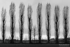 When i grow up (BrunoK.1) Tags: landscape wolken landschaft baum