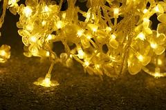 light in detail (daniel_james) Tags: sydney vivid australia nsw royalbotanicgardens 2016 cathedraloflight tamron60mmmacro
