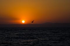 IMG_7668 (xplight) Tags: sunset sea sun seascape bird fly seagull hills