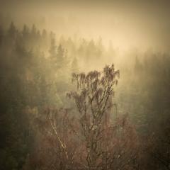 Birch on pine (Roksoff) Tags: mist reflection water fog landscape scotland naturereserve birch larch glenaffric scottishhighlands scotspine 70200mmf28 caledonianforest leefilters lochaffric lochbeinnamheadhoin annich nikodd800