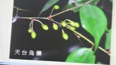 DSC07628 (yongheecs永和社大生態保育社) Tags: 林場