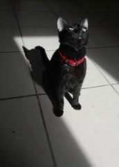 La Tichi (LUIS BARAHONA VERA) Tags: kitty gatita