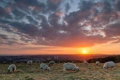 Countryside At My Doorstep (S l a w e k) Tags: city uk sunset england panorama clouds landscape sussex evening countryside spring brighton sheep country cloudscape grazing southdowns